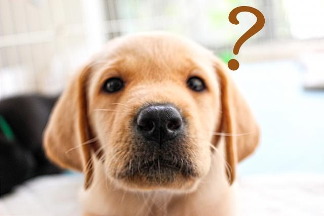 「はははのは」が楽天で売ってるか疑問な犬